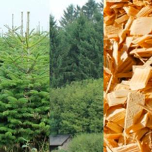apres Treezmas : Adoptez et replantez votre sapin de noël !