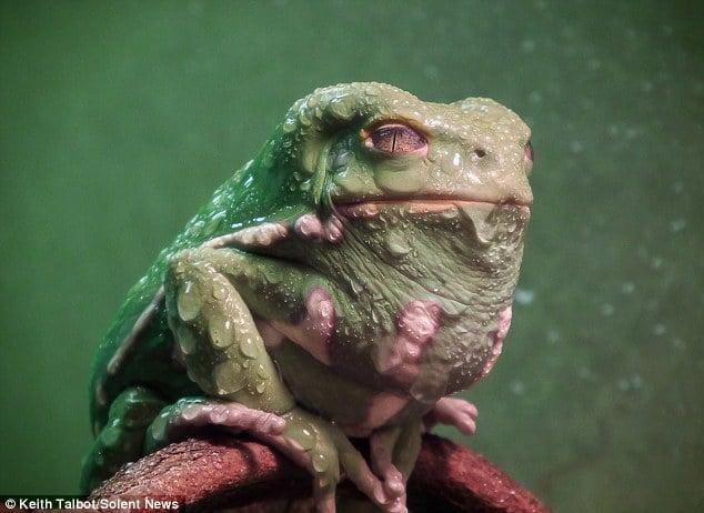 jabba1 L'image du jour : Jabba le Hutt existe vraiment et il vit sur Terre !