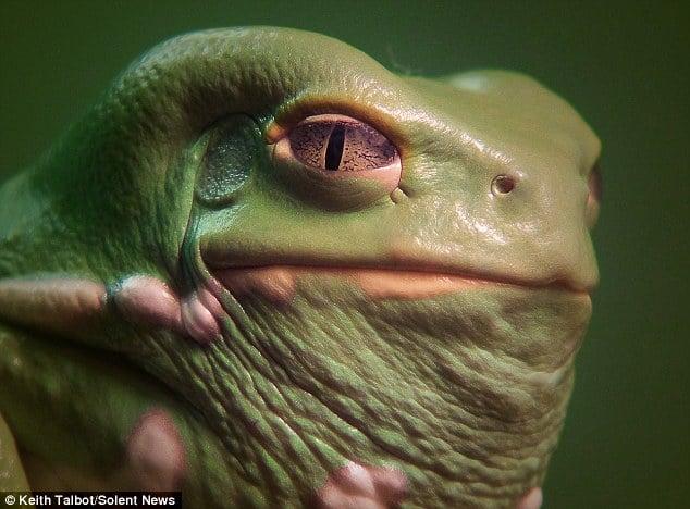 jabba2 L'image du jour : Jabba le Hutt existe vraiment et il vit sur Terre !