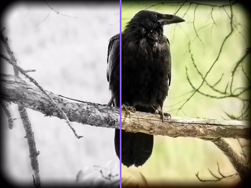rendered-comparison-colorize-photo Coloriser une photo noir et blanc gratuitement et en ligne !