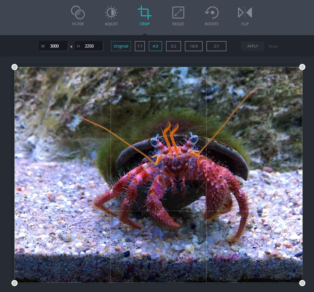 canva-photo-editor Canva Photo Editor, un éditeur de photos simple, gratuit et en ligne !